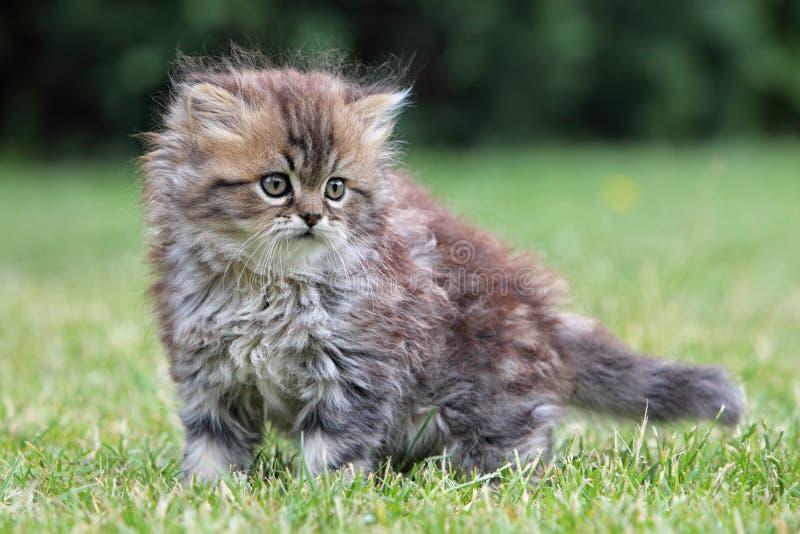 Молодой кот, зеленое внешнее стоковая фотография rf