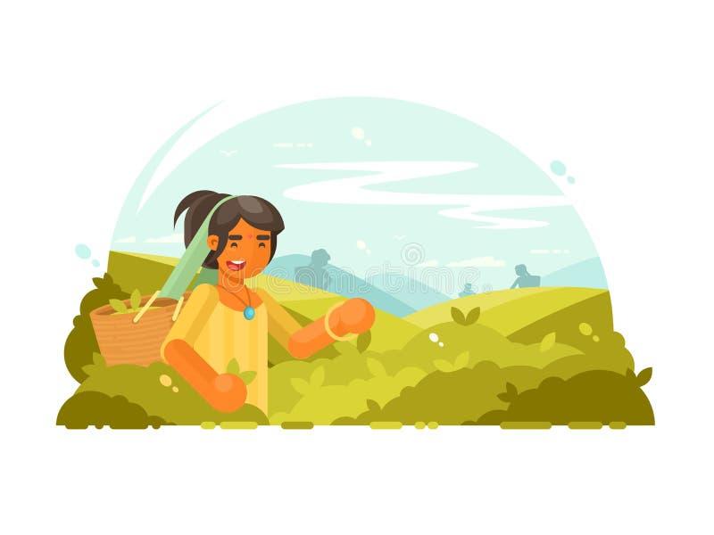 Молодой мальчик собирает чай бесплатная иллюстрация