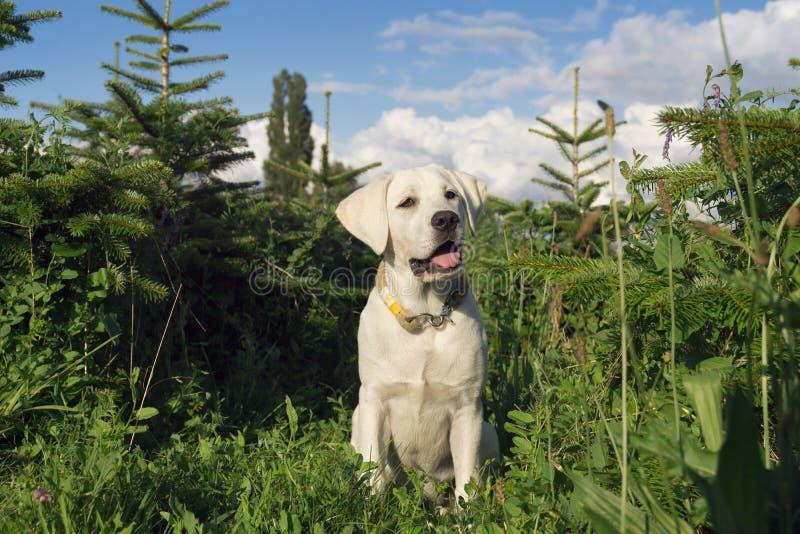 Молодой милый щенок маленькой собаки в зеленом поле стоковые изображения