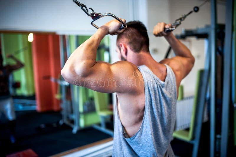 молодой, мышечный человек, культурист разрабатывая в спортзале стоковые фотографии rf