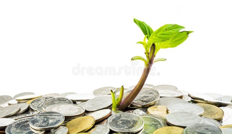 Молодой росток от кучи монеток стоковые фото