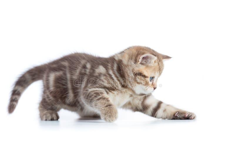 Молодой смешной кот улавливая изолированное что-то стоковое фото rf