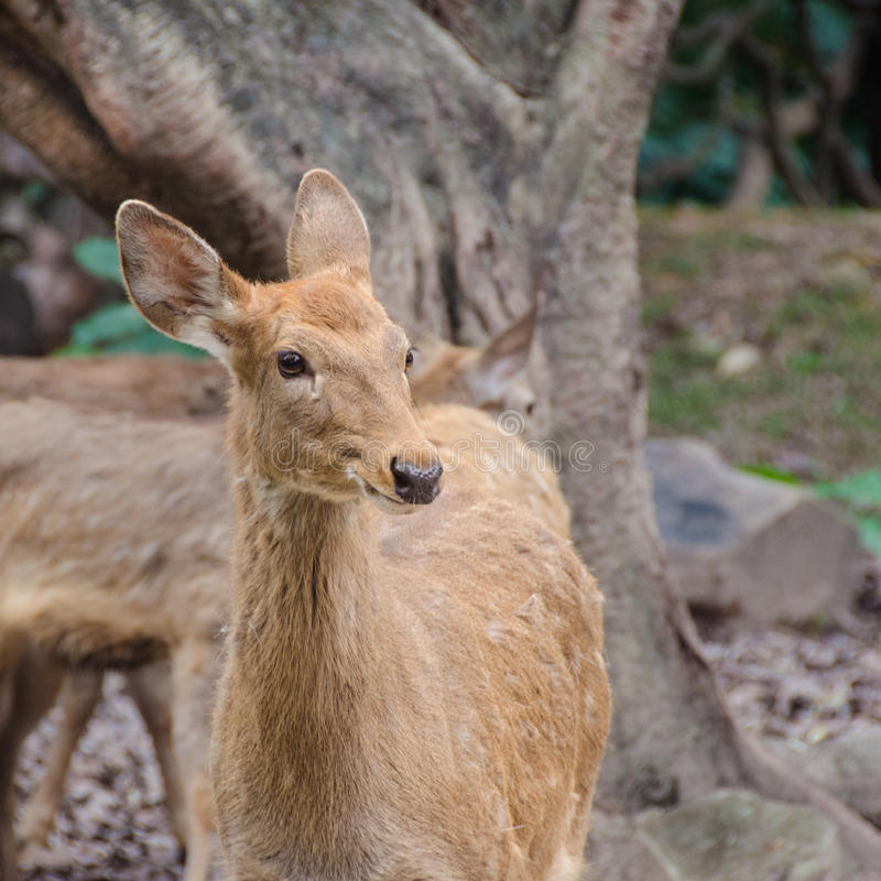 Молодой смотреть оленей стоковое изображение rf
