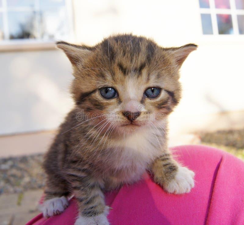 Молодой унылый котенок tabby любимчика стоковое изображение rf