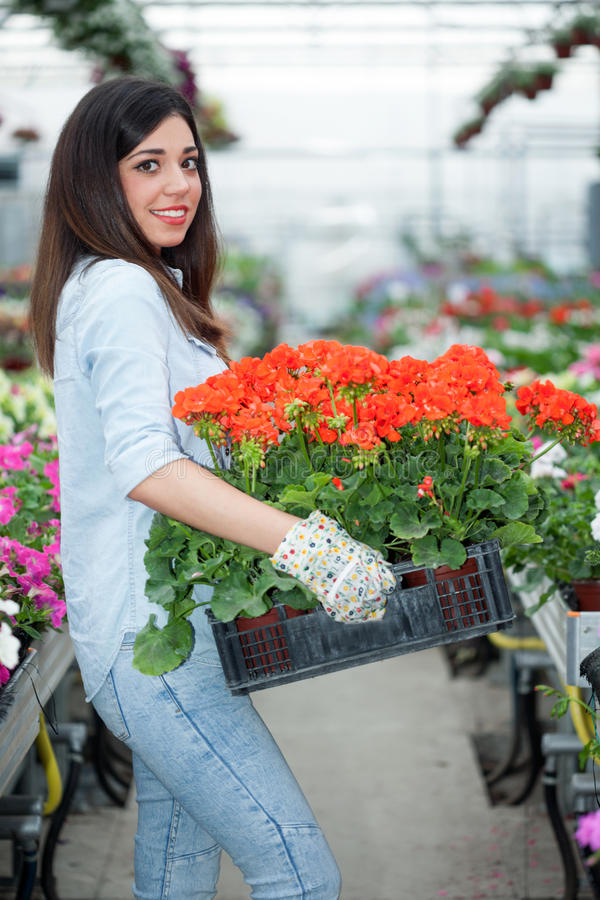 Молодой усмехаясь флорист женщины работая в парнике стоковое фото