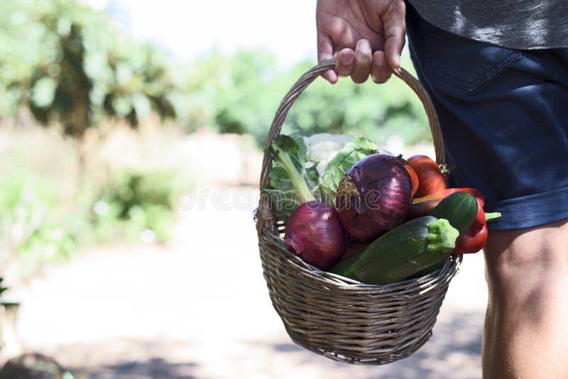 Молодой человек с корзиной полной овощей стоковое фото