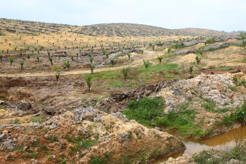 Молодые деревья масличной пальмы засаженные на освобоженной земле - серии 5 стоковые фотографии rf