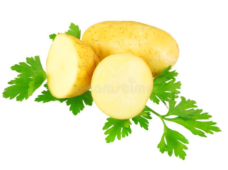 Молодые картошки, украшать петрушки. Изолированный стоковые фотографии rf
