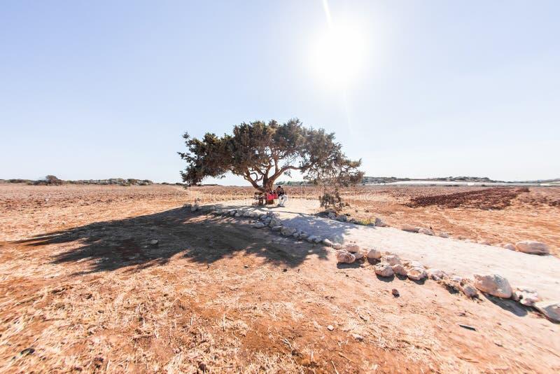 Молодые пары сидя под деревом в природе стоковая фотография