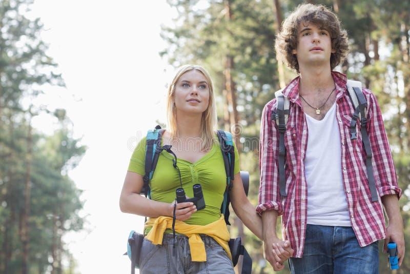 Молодые пары смотря отсутствующий пока пеший туризм в лесе стоковые изображения rf