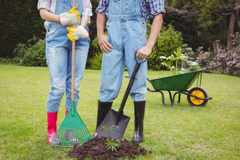 Молодые пары стоя около деревца в саде стоковые изображения