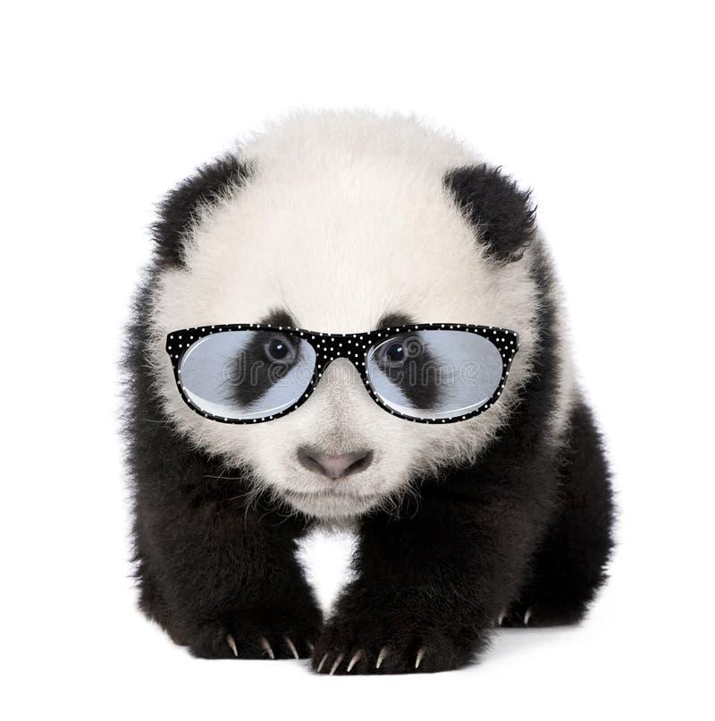 Молодые стекла гигантской панды нося стоковая фотография rf