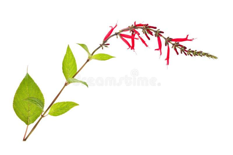 Мудрые цветки стоковые изображения rf