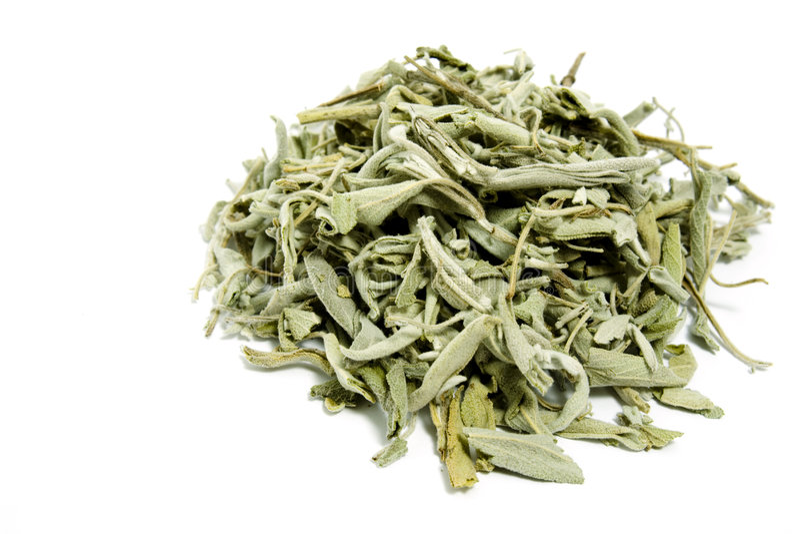 мудрый чай стоковая фотография rf