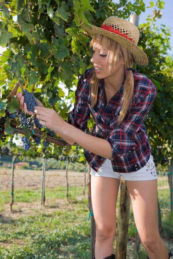 мужицкие детеныши женщины виноградников стоковая фотография