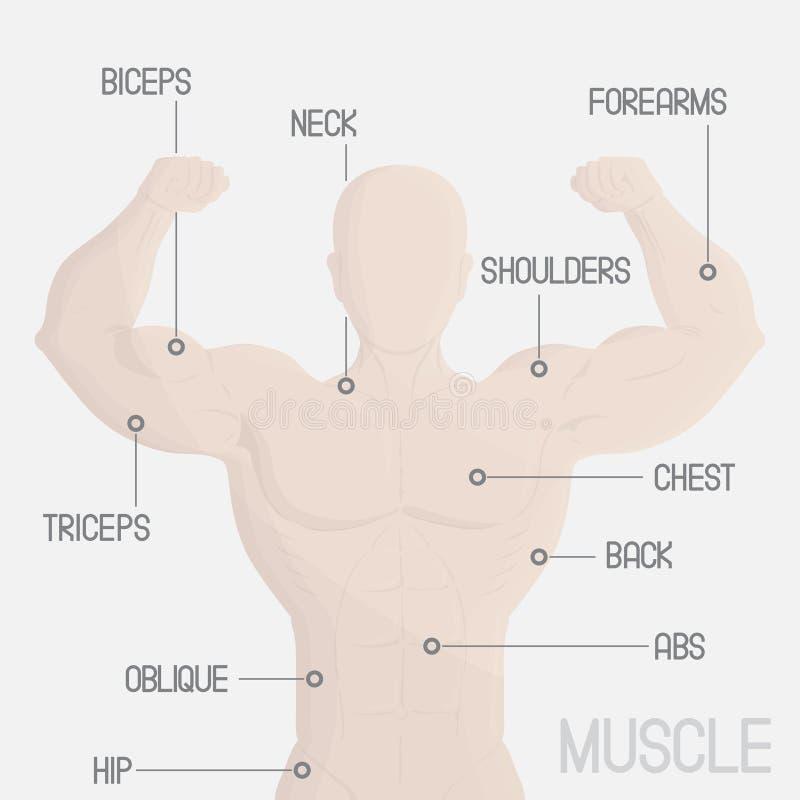 мужская иллюстрация спортзала мышцы части бесплатная иллюстрация