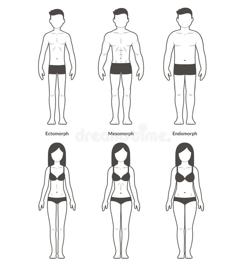 Мужские и женские типы телосложения иллюстрация штока