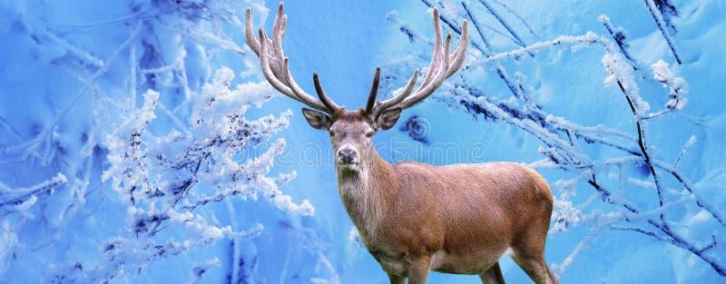 Мужские олени в лесе зимы стоковые изображения rf