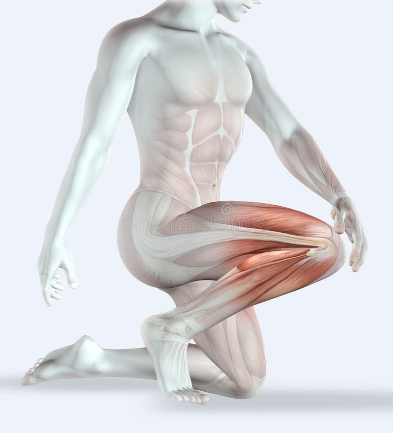 мужское держа колено 3D в боли бесплатная иллюстрация