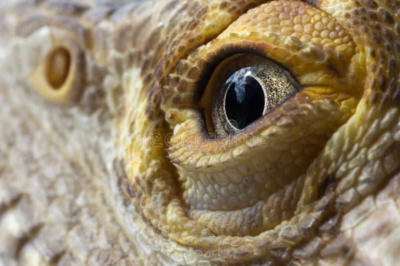 Мужской бородатый макрос глаза дракона стоковое фото rf