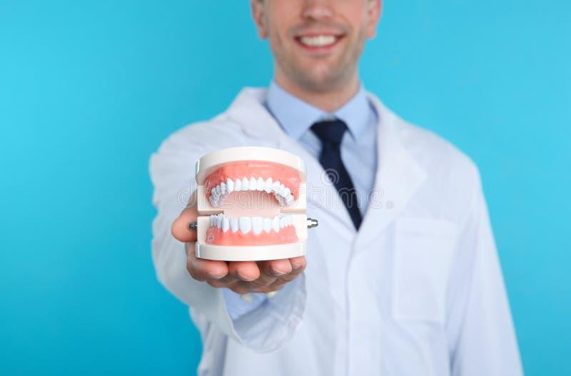 Мужской дантист держа челюсти моделирует на предпосылке цвета стоковые изображения
