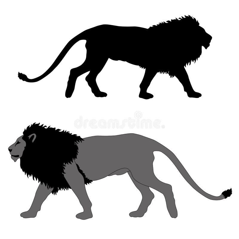 Мужской лев идет черный серый силуэт стоковые изображения