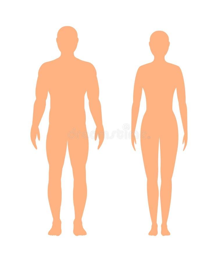Мужской и женский силуэт на белой предпосылке, иллюстрация вектора