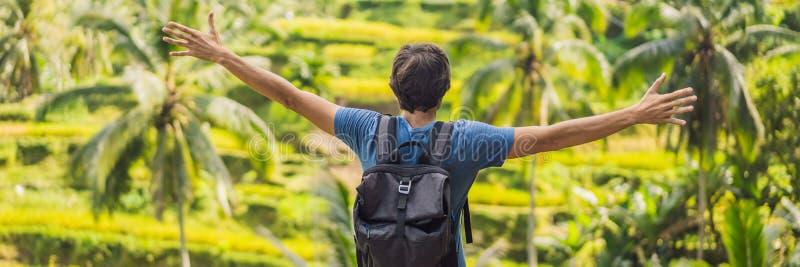 Мужской турист с рюкзаком идет на ЗНАМЯ поля риса, ДЛИННЫЙ ФОРМАТ стоковые фотографии rf
