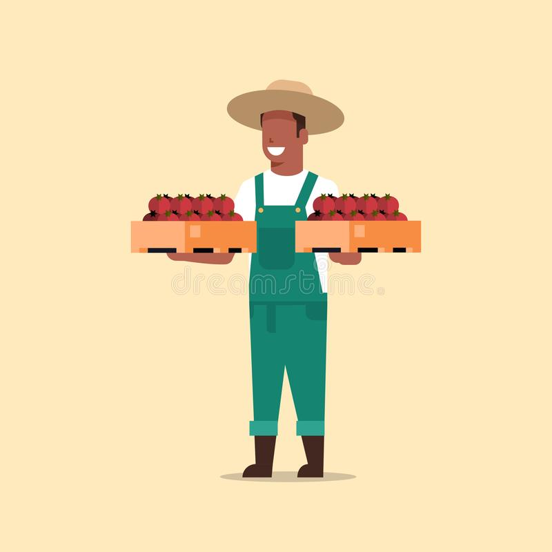 Мужской фермер держа коробки с человеком красных зрелых томатов Афро- иллюстрация штока