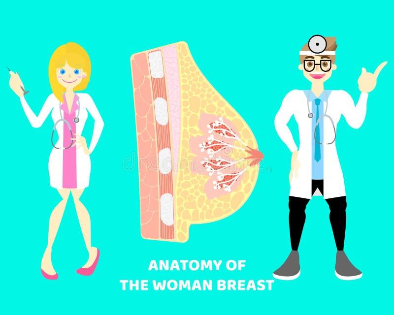 мужчина и женский доктор с ниппелью человеческой груди mammary, нервной системой части тела анатомии внутренних органов иллюстрация вектора