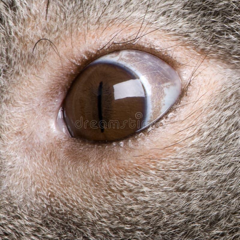 мужчина koala глаза медведя близкий вверх стоковое изображение