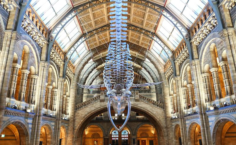 Музей естественной истории, Лондон, Великобритания стоковые фотографии rf