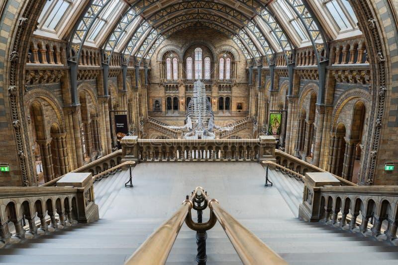 Музей естественной истории - Лондон стоковые изображения rf