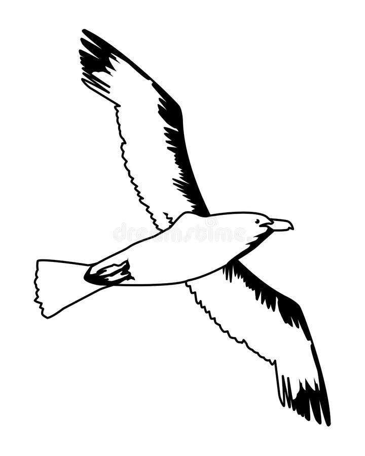 Мультфильм птицы чайки изолированный летанием в черно-белом иллюстрация штока