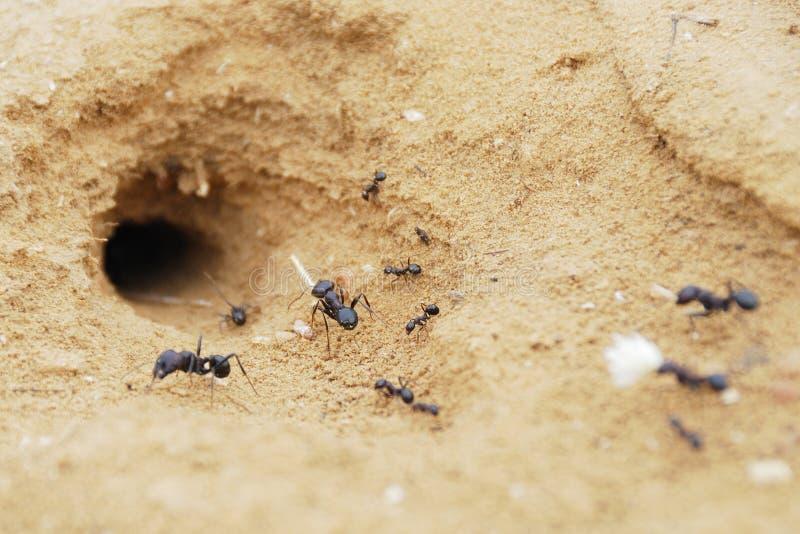 муравеи стоковые изображения rf
