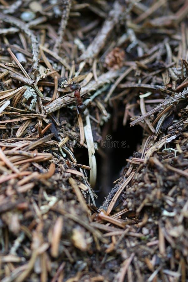 Download Муравей пошел из дома стоковое изображение. изображение насчитывающей холм - 97763139