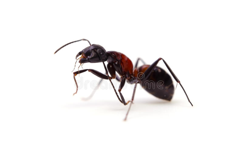муравей стоковые фото