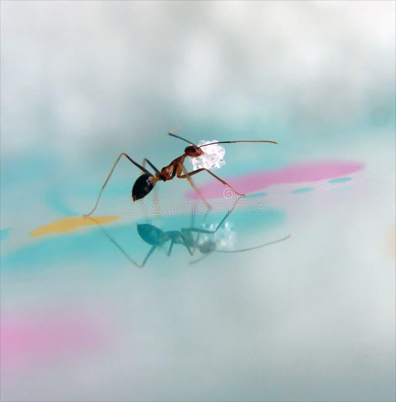 муравей стоковое фото rf
