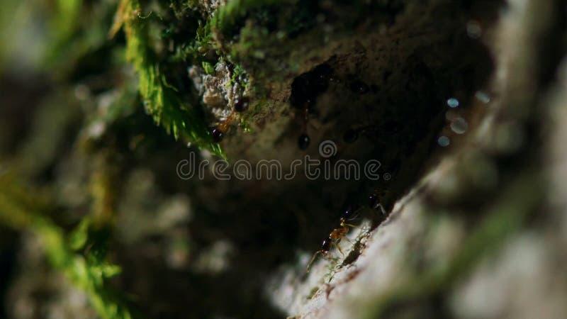 Муравьи носят яйца на дереве в тропическом тропическом лесе стоковое фото