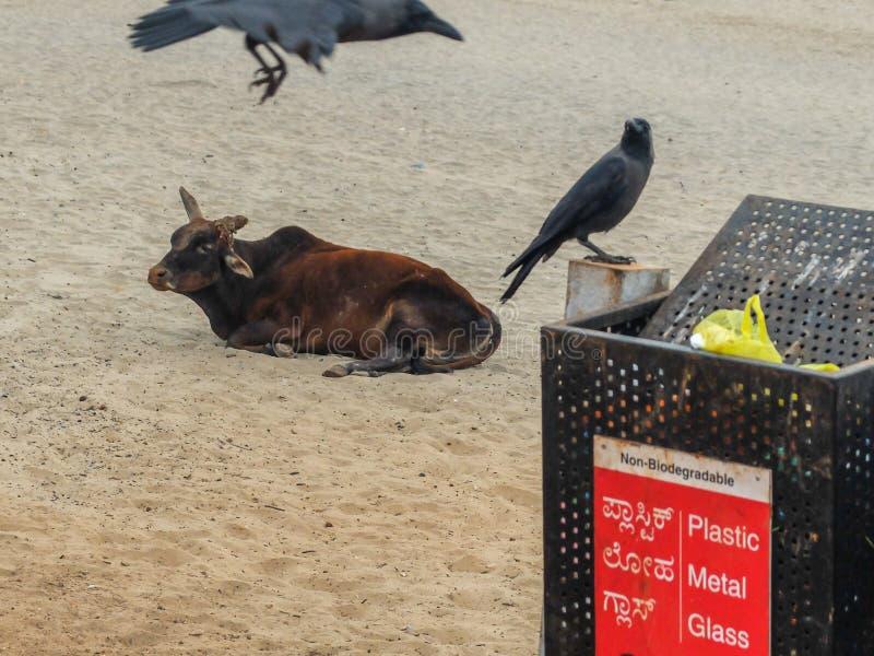 Мусорные ведра на пляже Gokarna, Karnataka, Индии стоковые фотографии rf