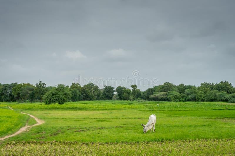 Муссон Индия сельская стоковые фото