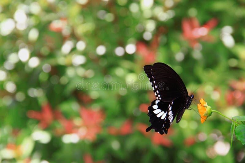 Муха бабочки стоковые изображения rf