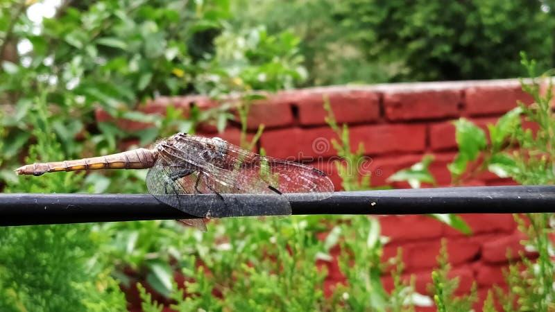 Муха дракона замораживания на веревочке стоковые изображения rf