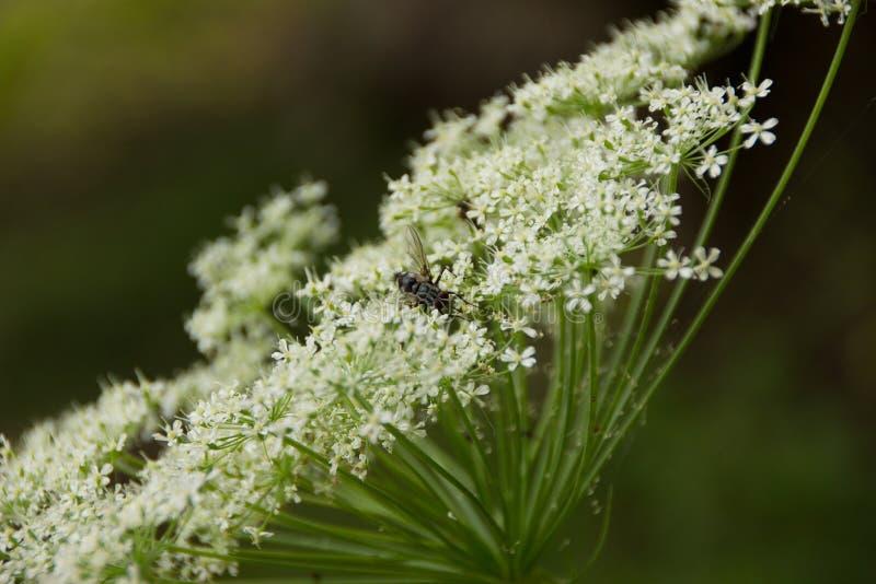 Муха к цветкам стоковая фотография