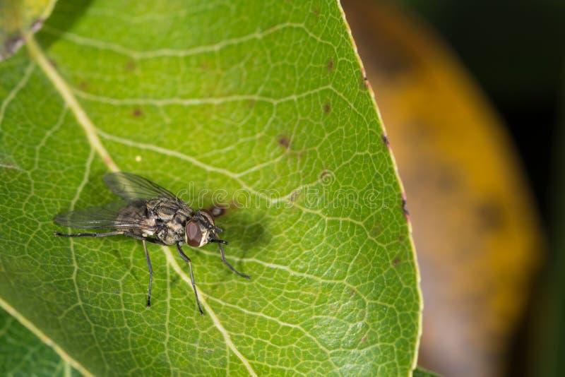 Муха на листьях стоковая фотография