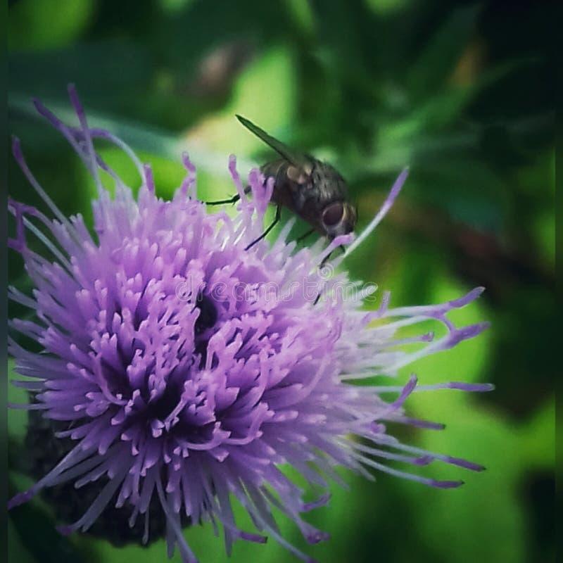 Муха на цветке стоковое изображение