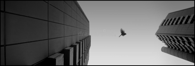 муха птицы моя стоковые фотографии rf