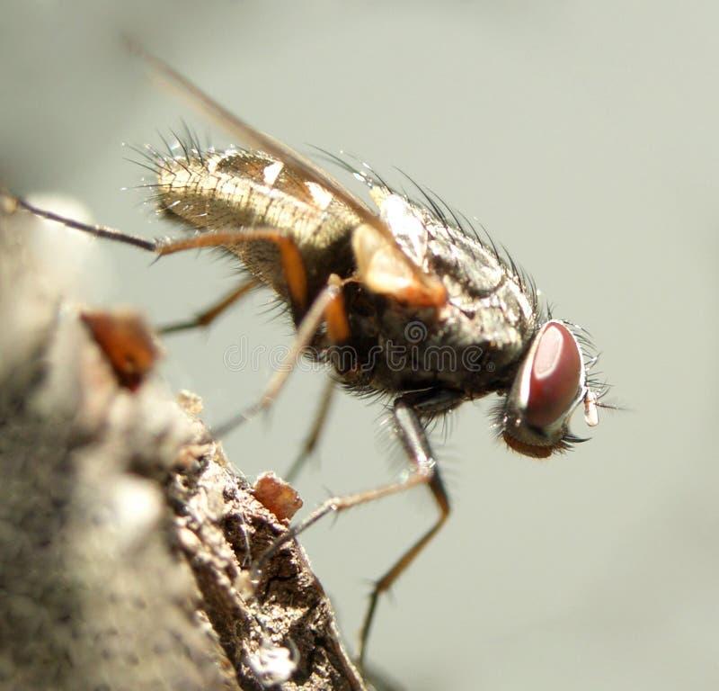 муха 7 стоковое изображение rf