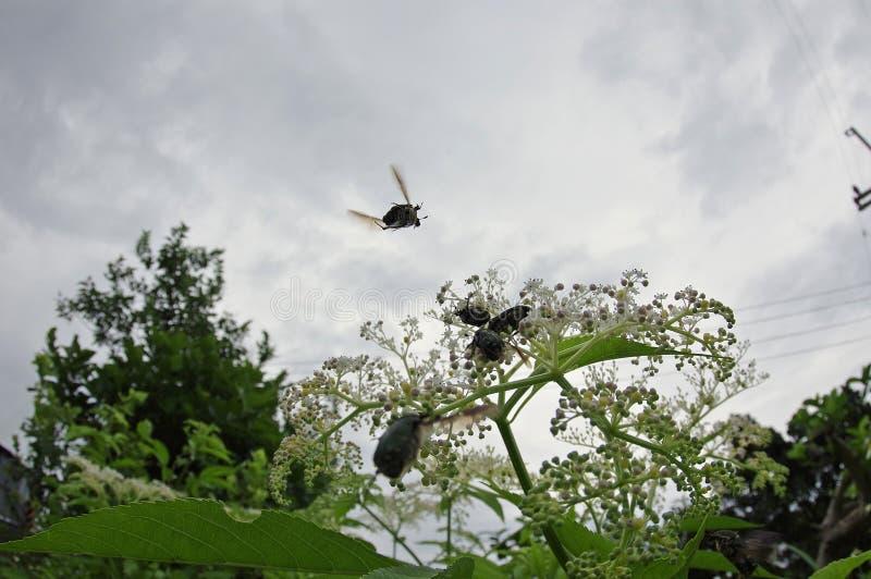 Мухы к свободному ladybug стоковое изображение