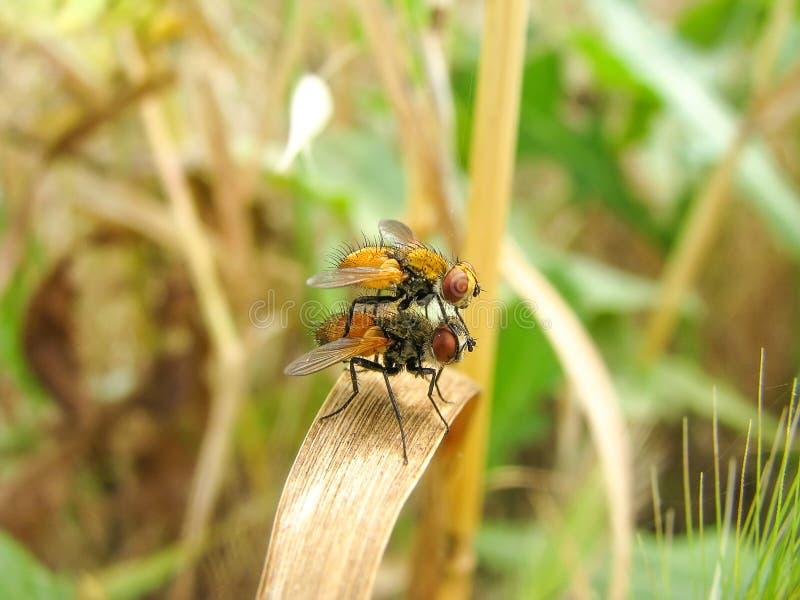 2 мухы стоковое изображение